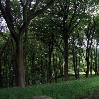 Lancashire-wood